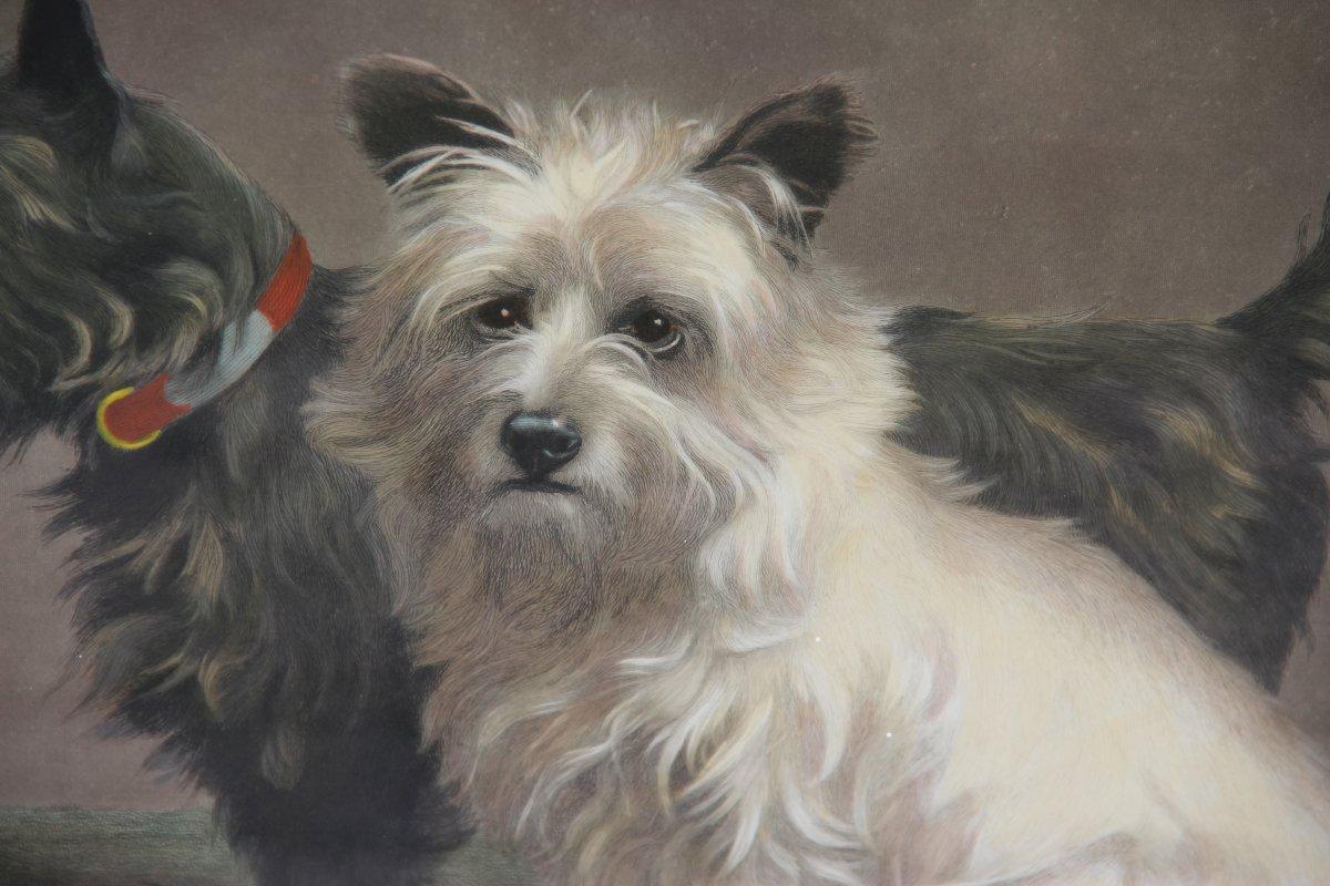 MARGARET COLLYER (1872-1945) : SCOTTY AND KHAKI