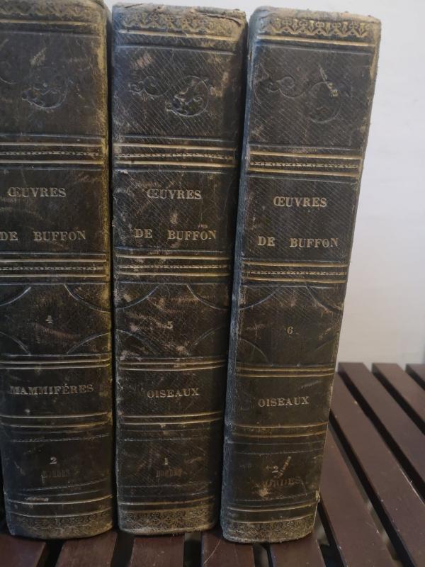 Oeuvres Complètes De Buffon- Imprimé par H. Fournier et Cie - 1840.-photo-2