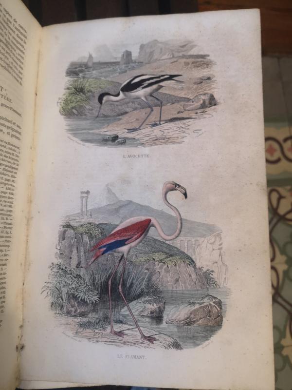 Oeuvres Complètes De Buffon- Imprimé par H. Fournier et Cie - 1840.-photo-4