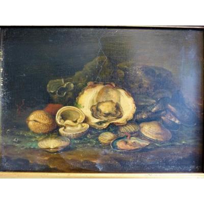 Jg Coste Still Life With Shells, 1852