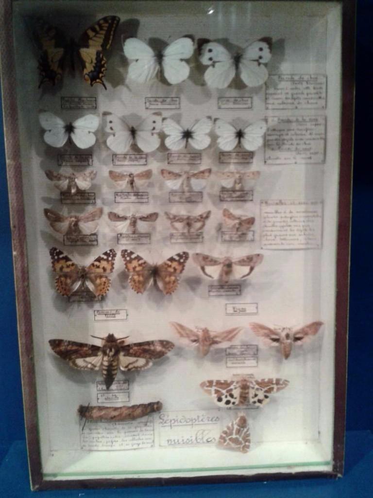 Entomologist Box, Butterflies, Maison Deyrolle, Circa 1950