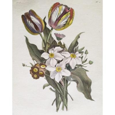 Still Life Flowers Engraving Watercolor 18th