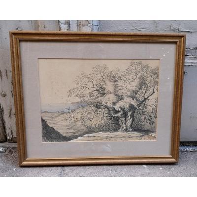 """Dessin Et Aquarelle XIXe  """" An Olive tree Mentone"""""""