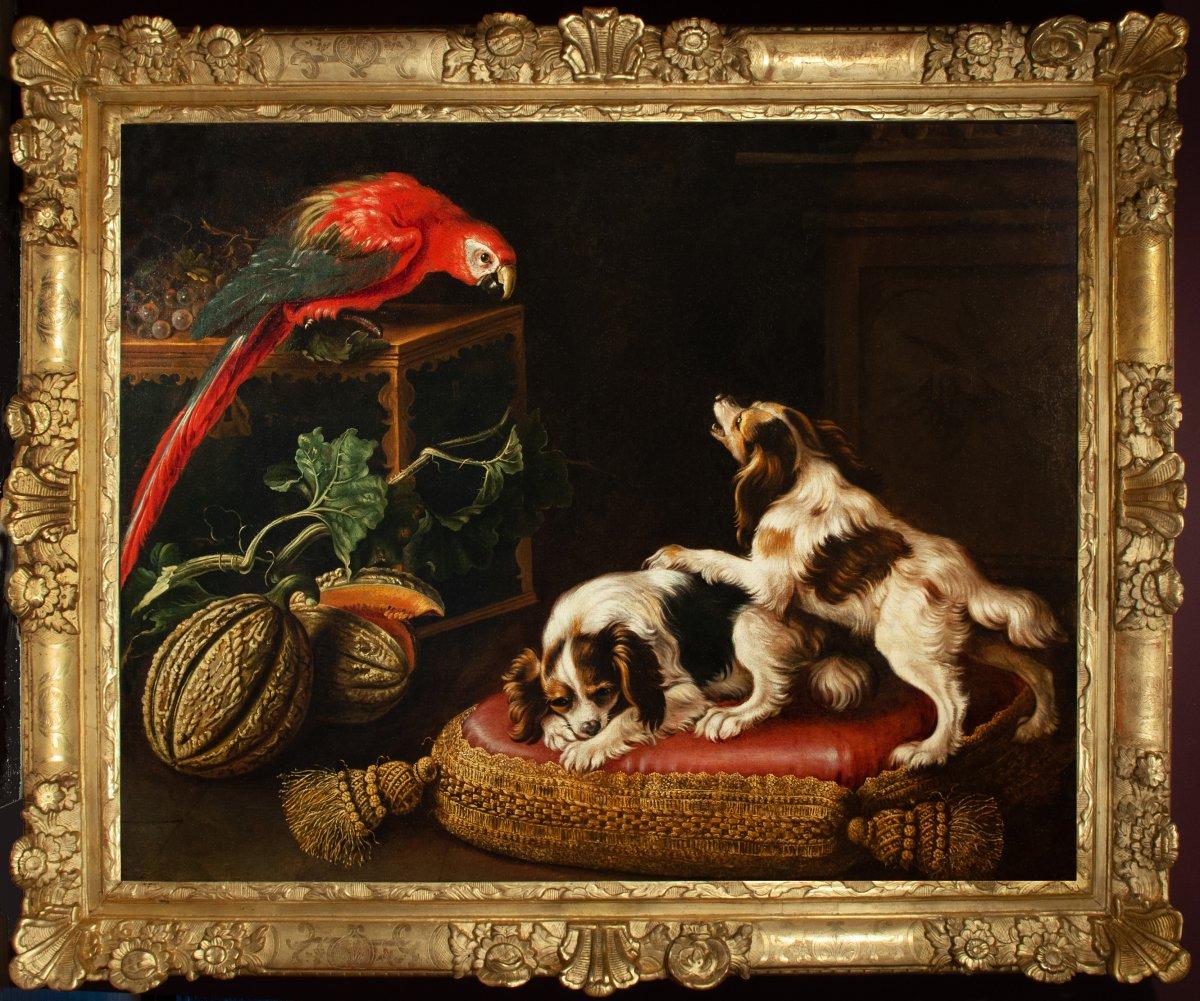 Perroquet affrontant deux épagneuls. Par Reynaud LEVIEUX (Nîmes 1613-Rome 1699)