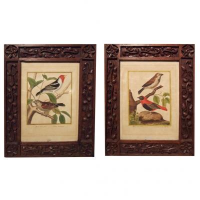 Une Paire De Gravures aquaréllées, Oiseaux