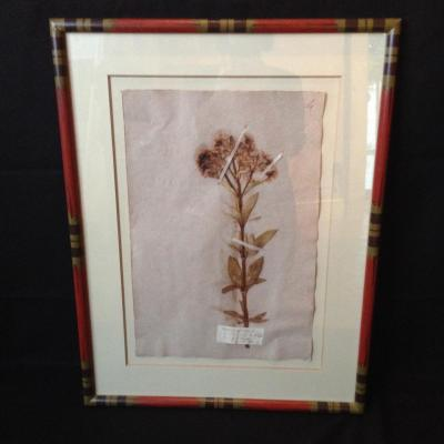 Série d'Herbiers fin XIXème