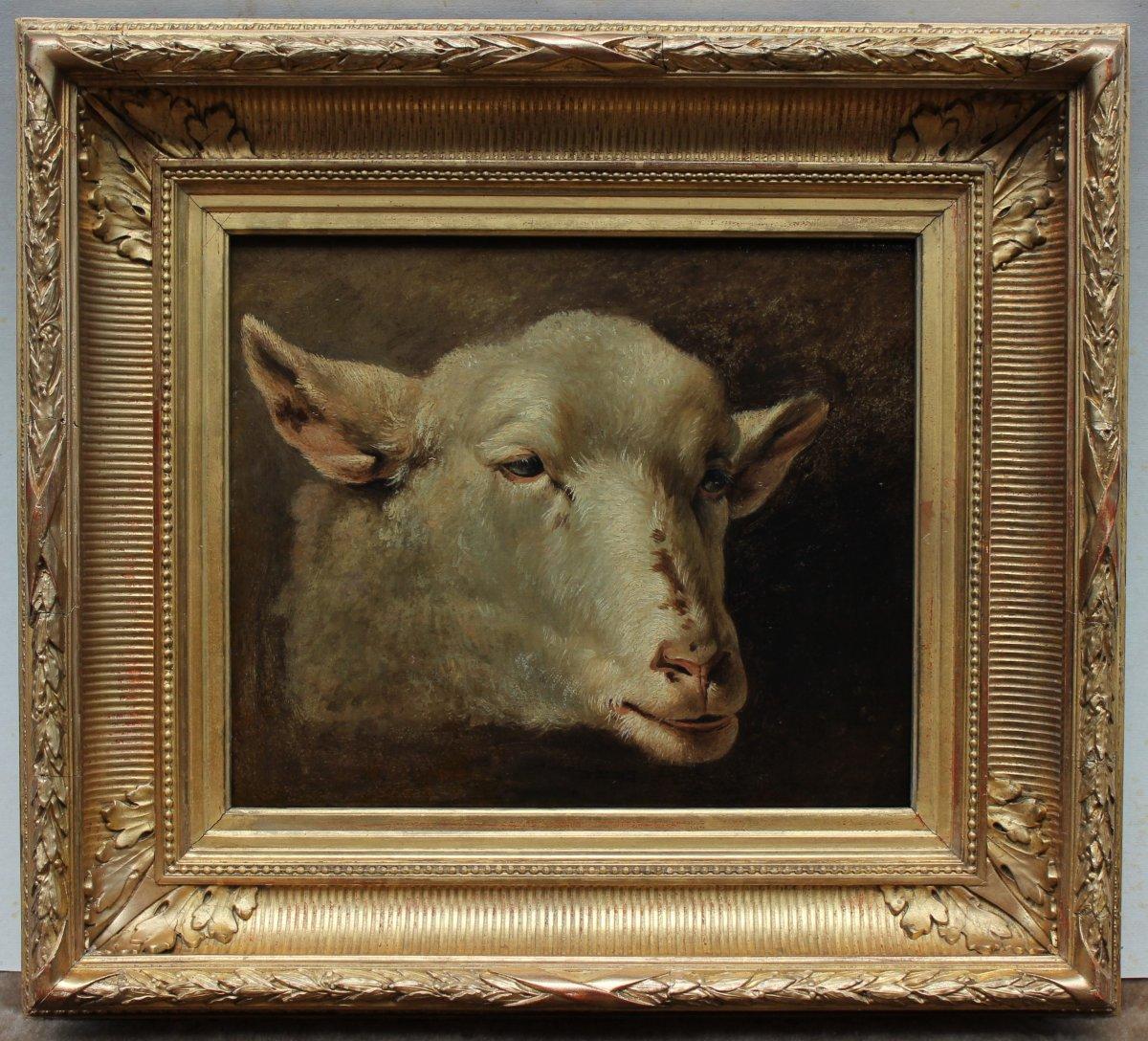 Etude de tète de mouton XIXè, huile sur papier