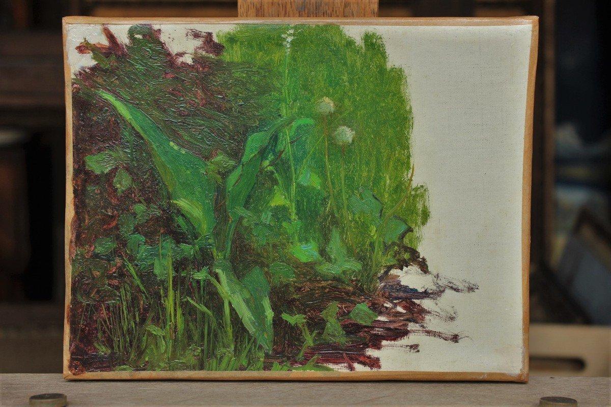 Raymond Thibésart (1874-1968). Etude de végétation-photo-2