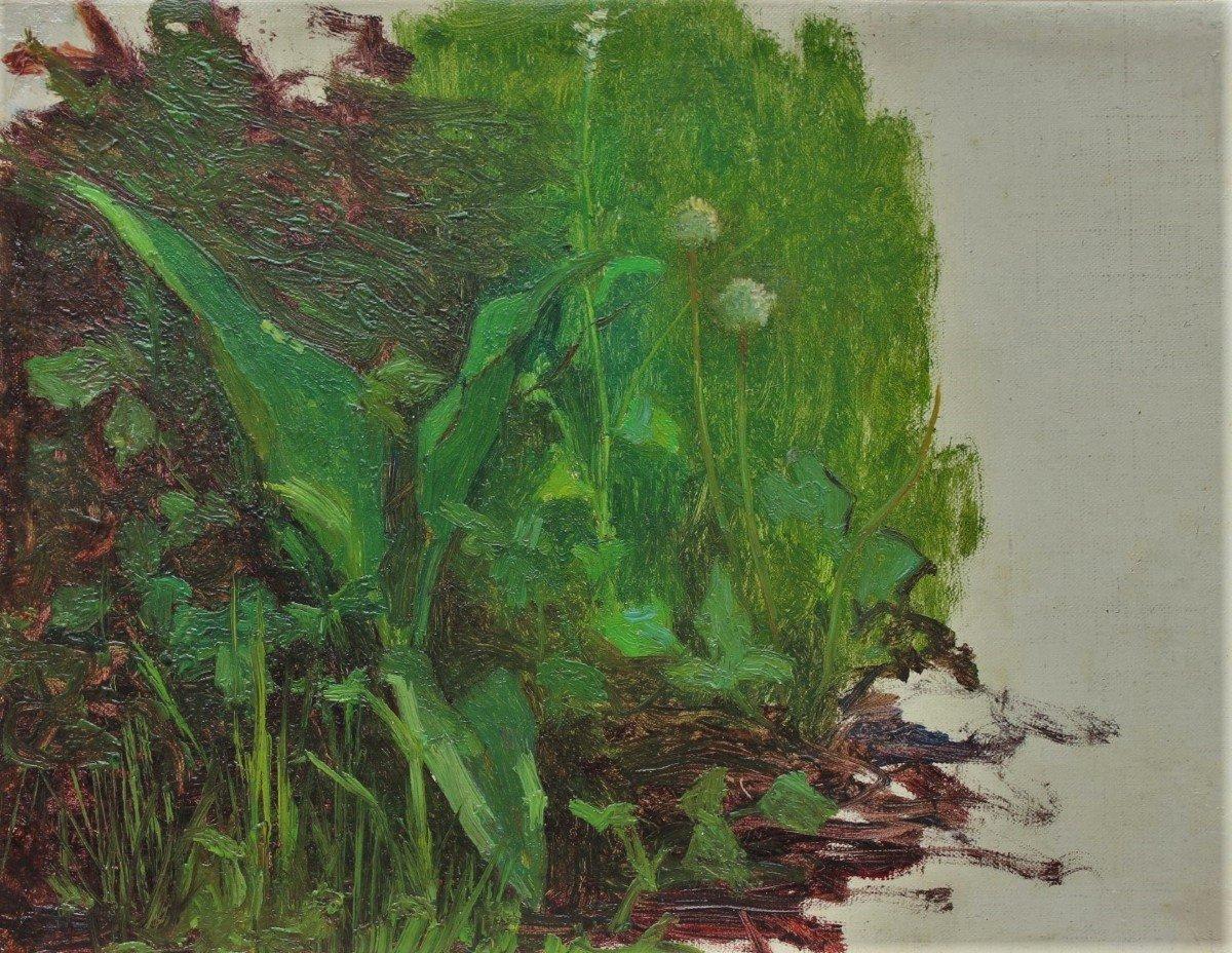 Raymond Thibésart (1874-1968). Etude de végétation