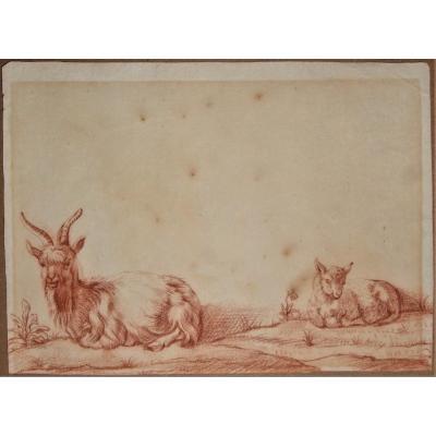 Ecole Hollandaise, Vers 1700 . Bouc & Chèvre . Sanguine Sur Papier Filigrané.