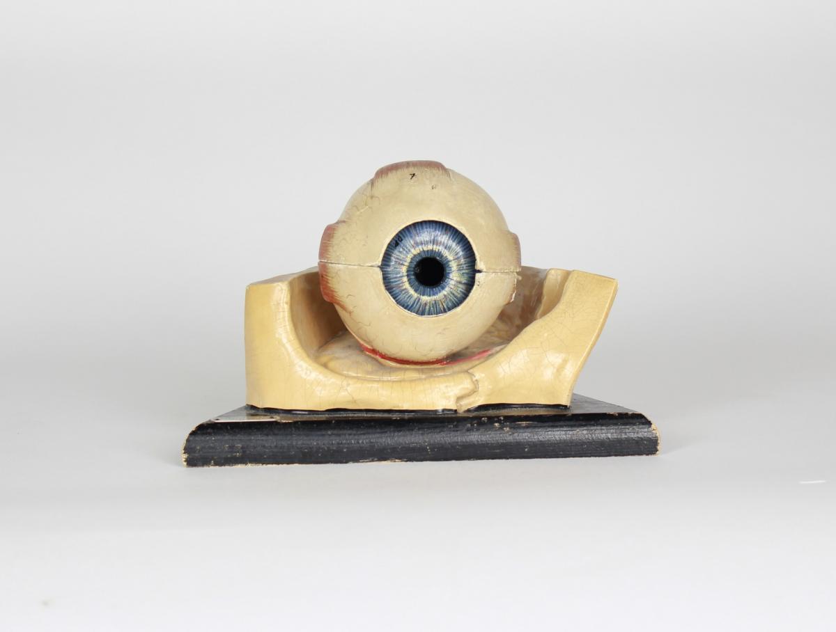 Modèle Anatomique De l'Oeil en Platre, Hollande années '30s