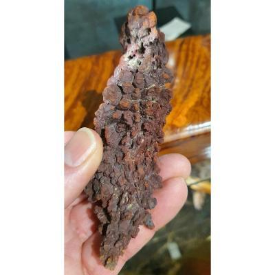 Prehistoric Bird Excrement Fosil