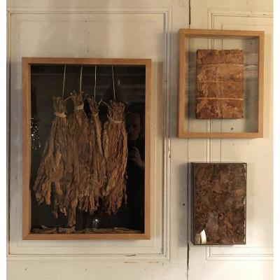 Tobacco Triptych In Oak Frames