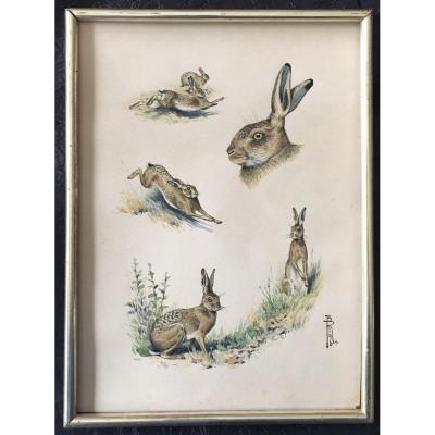 Boris Riab Animal Painter Watercolor Hare Study
