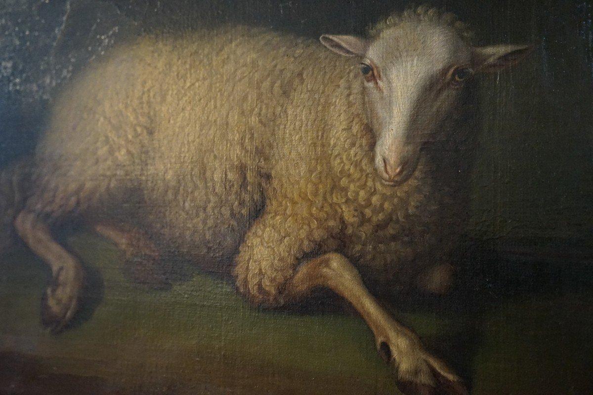 Exceptionnelle Huile Sur Toile  De La Fin Du 17ieme Représentant Un Mouton Assis -photo-2