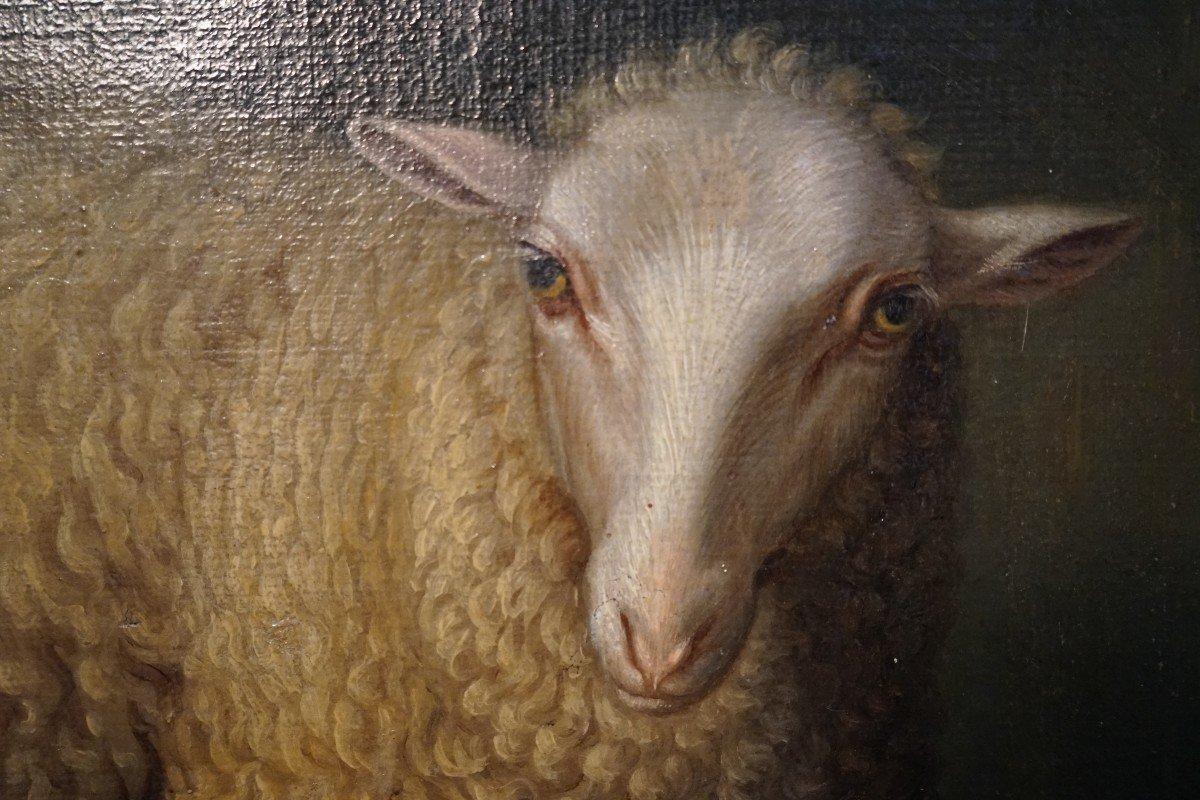 Exceptionnelle Huile Sur Toile  De La Fin Du 17ieme Représentant Un Mouton Assis -photo-3