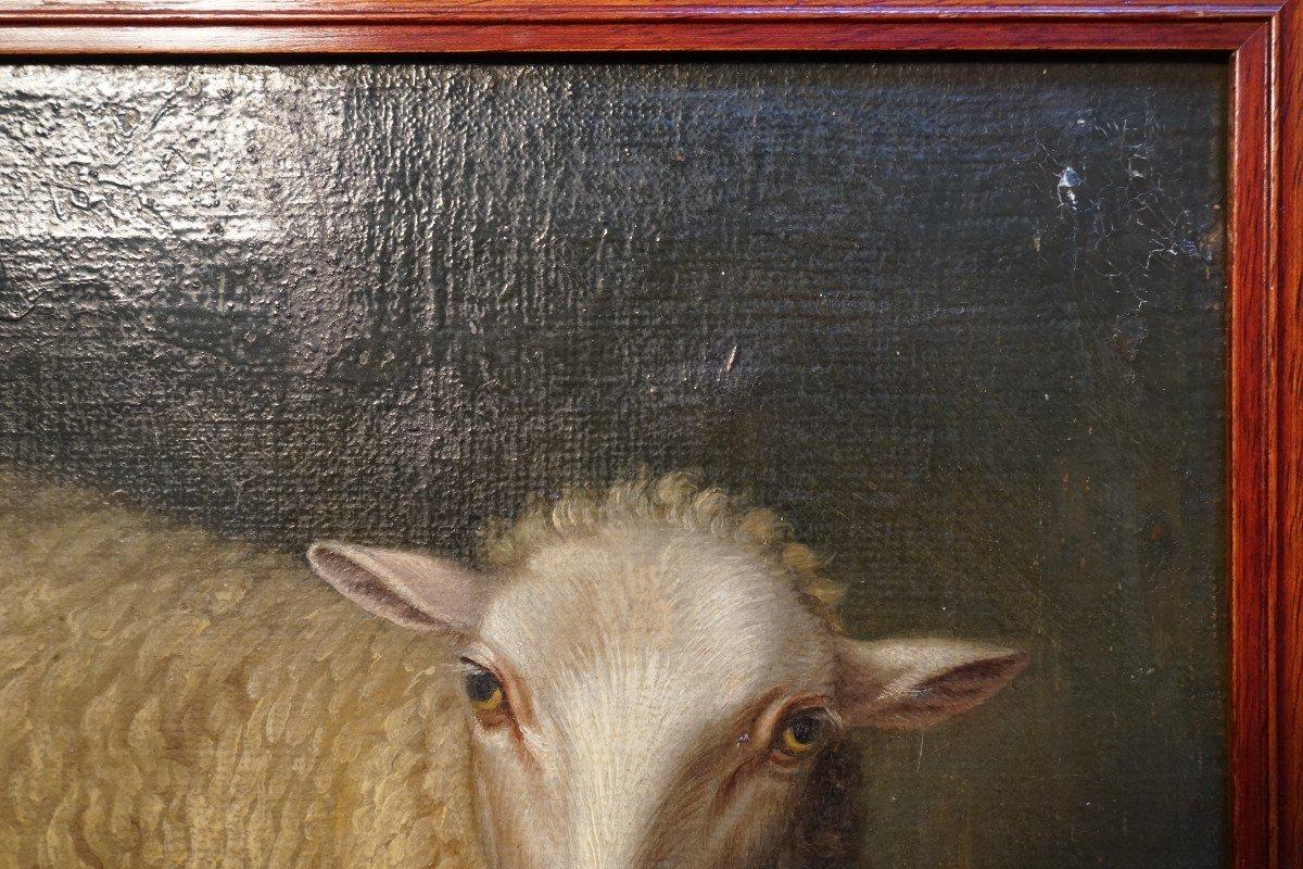 Exceptionnelle Huile Sur Toile  De La Fin Du 17ieme Représentant Un Mouton Assis -photo-5