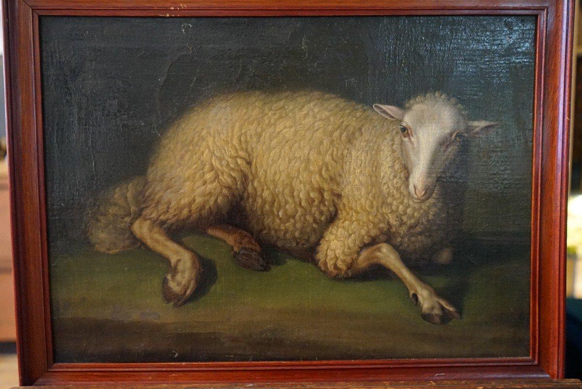 Exceptionnelle Huile Sur Toile  De La Fin Du 17ieme Représentant Un Mouton Assis