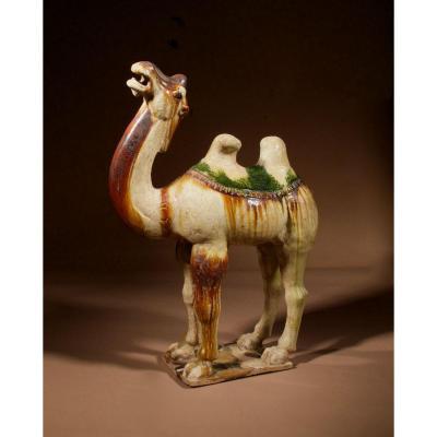 An Original Beautiful Sancai Glazed Tang Camel, Tang Dynasty, 618 -907 Ad