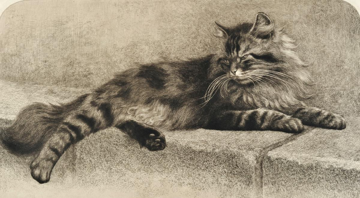 Charles-jean Renaud (1891-1958), Lying Cat, Etching And Dry Tip