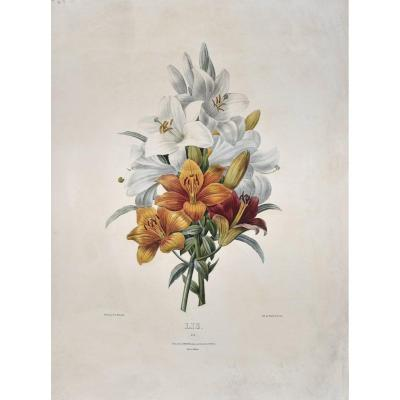 After Pj Redouté (1759-1840), Lily, Lithograph In Colors, 19th