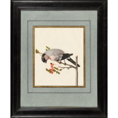 Karl Wilhelm Of Hamilton - Peony Bullfinch - 17th Ou 18th Century