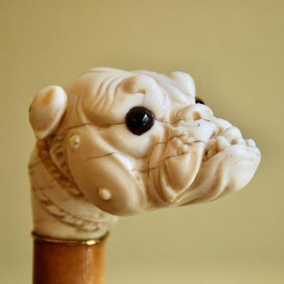 Nineteenth Carved Ivory Dog Cane Cane