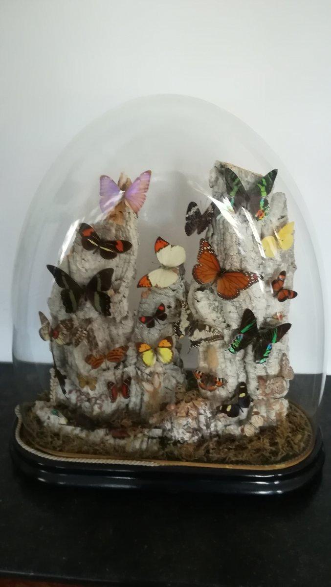 Butterflies Under Globe
