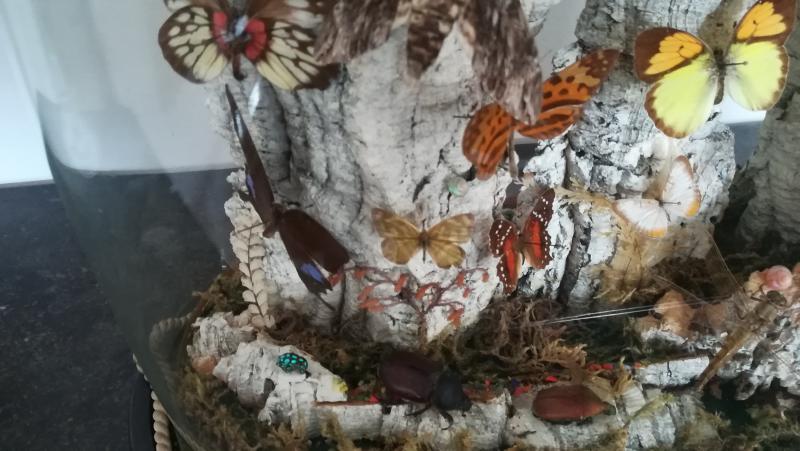Papillons Sous Globe-photo-2