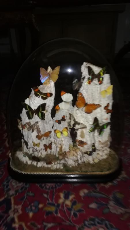 Papillons Sous Globe-photo-3