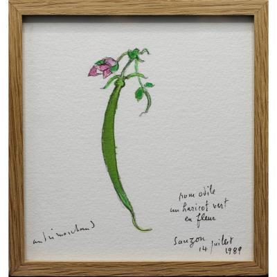 Haricot vert en fleur  - André MARCHAND