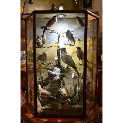 """Grand Diorama """"oiseaux"""", Epoque XIXe"""
