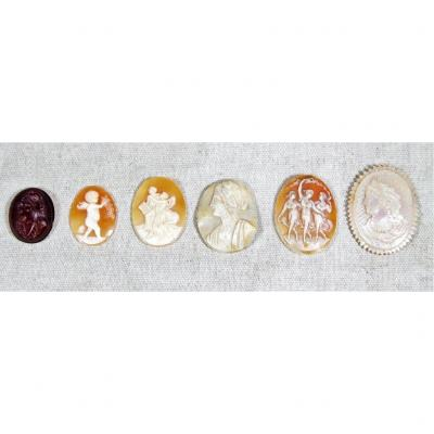 Lot Of 6 Cameos In Mother Of Pearl, Shell And Carnelian (signed), Nineteenth