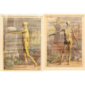 Albinus - Deux Estampes anatomie – 1749