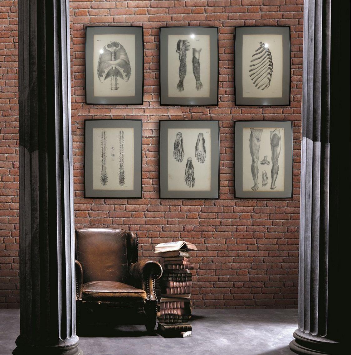 Serie De 6 Grandes Gravures Encadrées , Planches Anatomiques XIXe , Cabinet De Curiosités