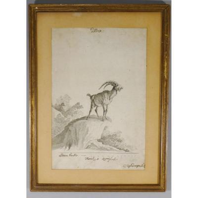 Johann Elias Ridinger, Gravure XVIII ème Originale à l'Eau Forte, Bouquetin, Première épreuve