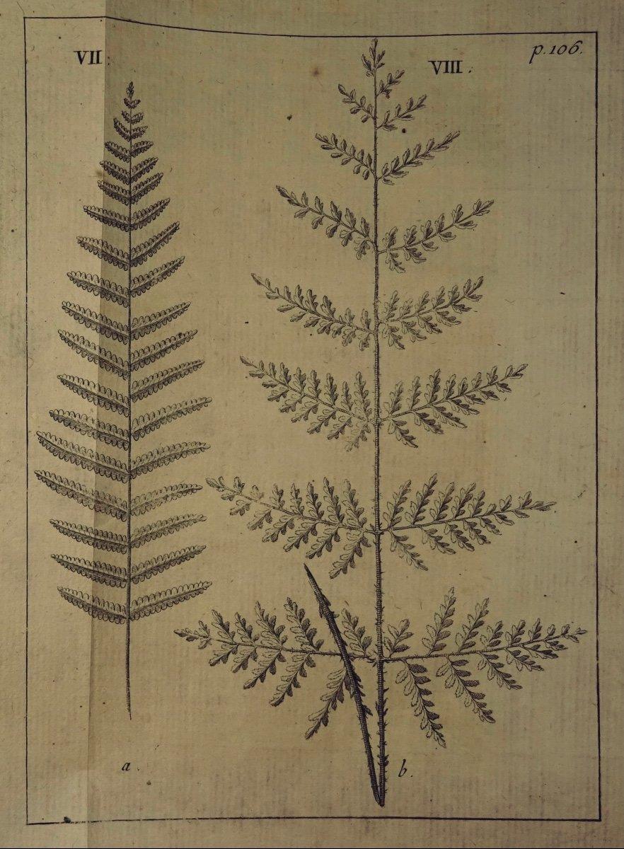 Livre En Latin De 1742. Rare Ouvrage En Latin Recensant Les Plantes d'Alsace. 7 Planches.-photo-1
