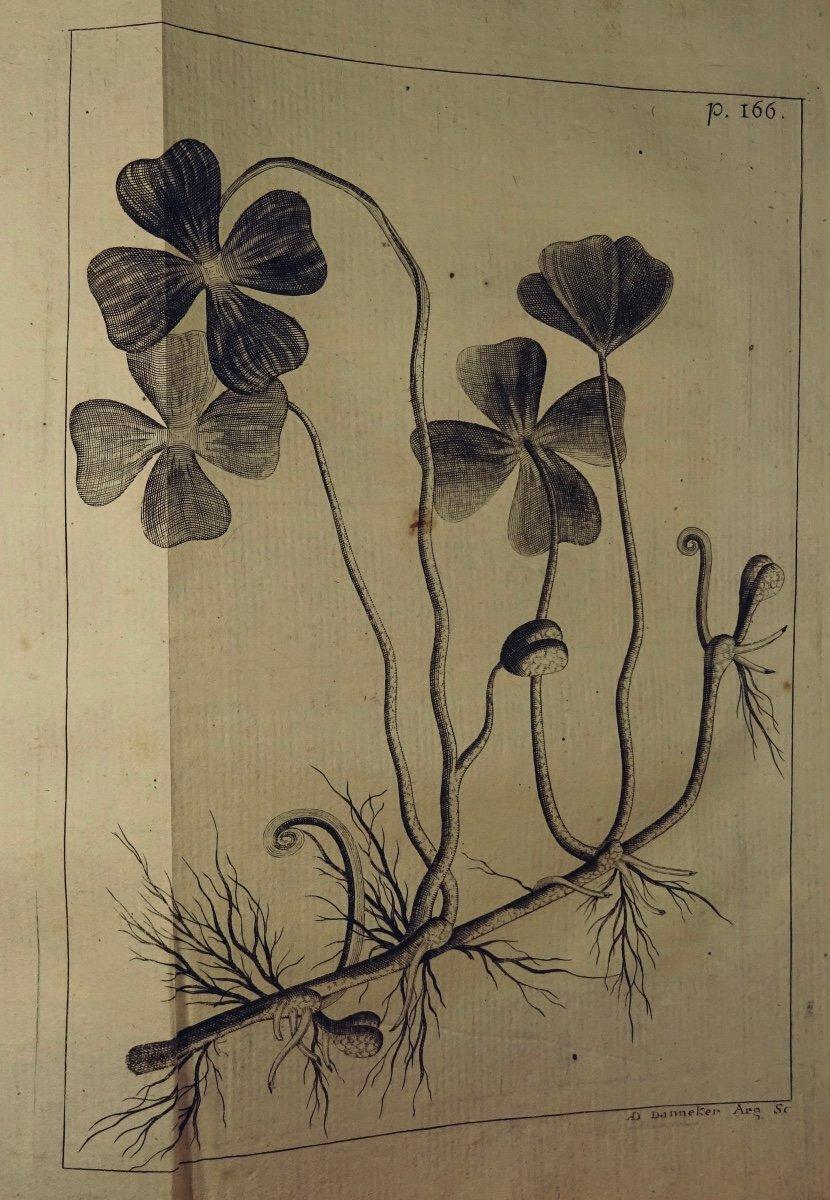 Livre En Latin De 1742. Rare Ouvrage En Latin Recensant Les Plantes d'Alsace. 7 Planches.-photo-2