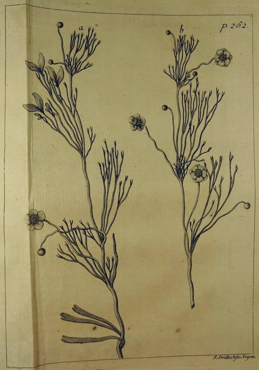 Livre En Latin De 1742. Rare Ouvrage En Latin Recensant Les Plantes d'Alsace. 7 Planches.