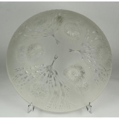 Sabino, Cup Glass Molded And Pressed. Seaweed And Sea Urchins