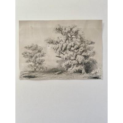 Landscape Drawing With Large Oaks