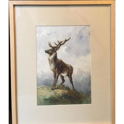 Watercolor Deer -