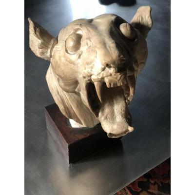 Large Skull Of Tiger Skinned: Plaster Early Twentieth Century