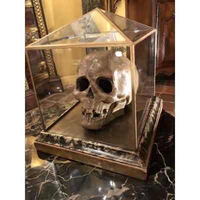 Grand Crâne, Vanité, Memento Mori, En Terre Cuite Du XIXe Siècle Et Sa Vitrine