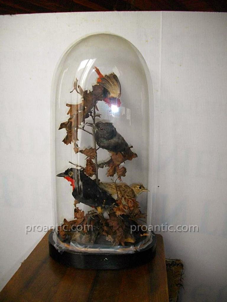 Globe oiseaux 19 me cabinet curiosit objets de curiosit - Globe cabinet de curiosite ...