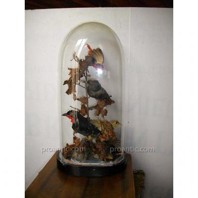 Globe Oiseaux 19ème Cabinet Curiosité