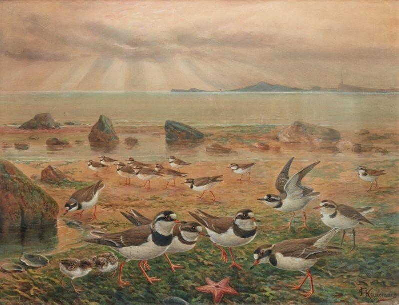 Watercolor & Guash Signed Johannes Gerardus Keulemans (1842-1912)