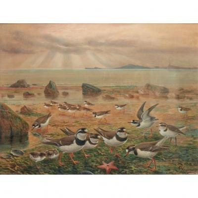 Watercolor & Guash Signed Johannes Gerardus Keulemans (1842-1912)
