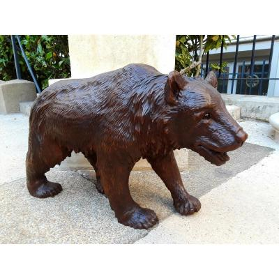 Black Forest - Black Forest '' Carved Wooden Bear '' XIXth Century