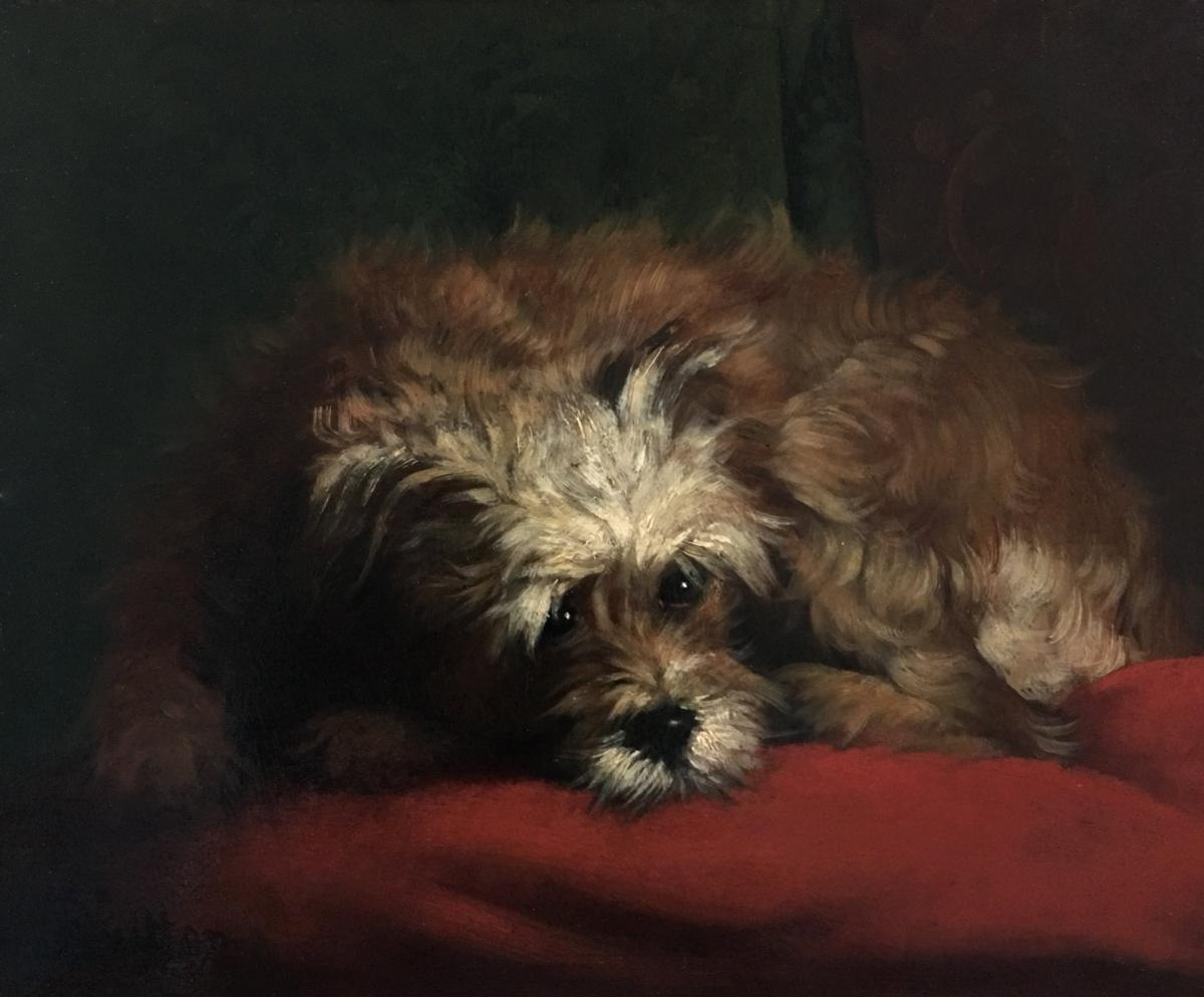 Beautiful Painting Portrait Of A Small Dog School Of The 19th